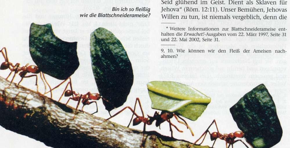 picture: http://www.manfred-gebhard.de/AFile0009-2.jpg
