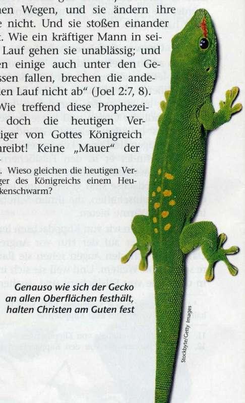 picture: http://www.manfred-gebhard.de/AFile0015-1.jpg
