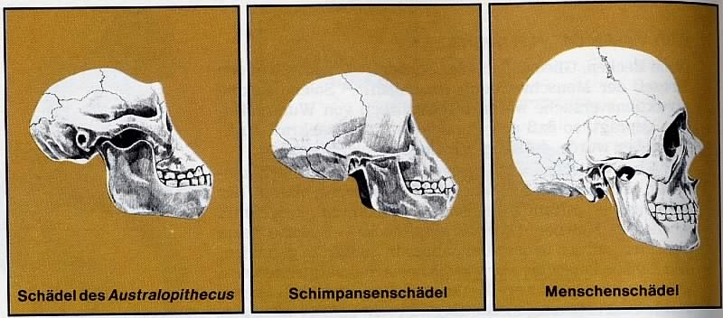 picture: http://www.manfred-gebhard.de/Schimpanse.jpg